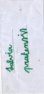 IpaSalvia